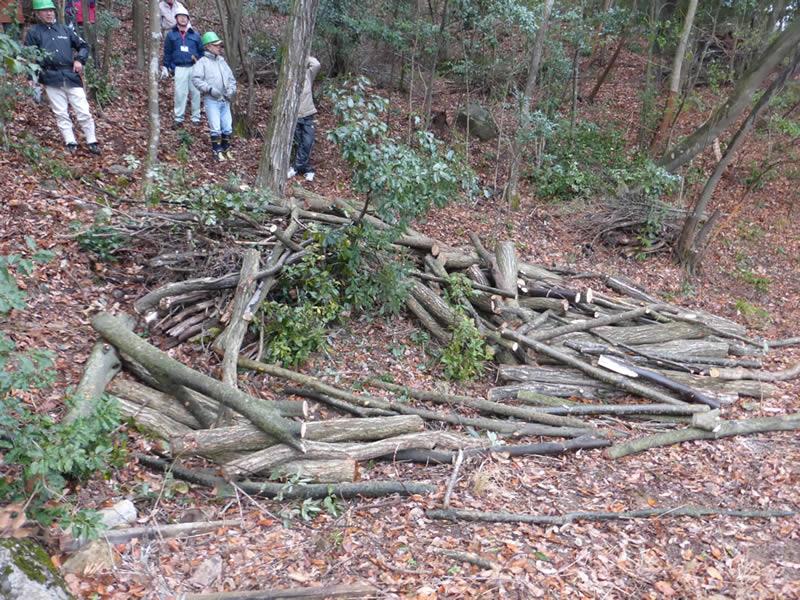 雑木間伐 野外活動