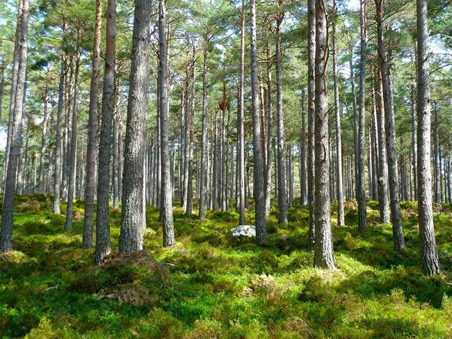 箭木木工所 環境への取り組み