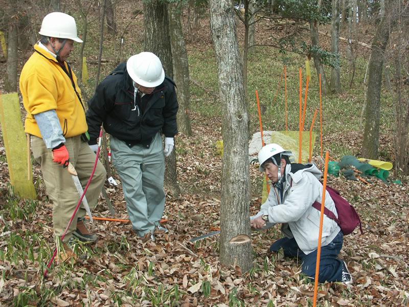オーダー家具の箭木木工所が行う森林保全活動
