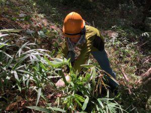 下草刈り作業